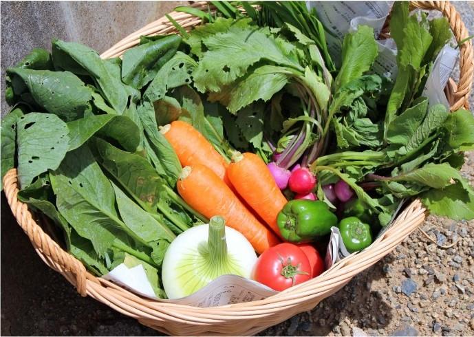 特別な野菜に変身できるかな?