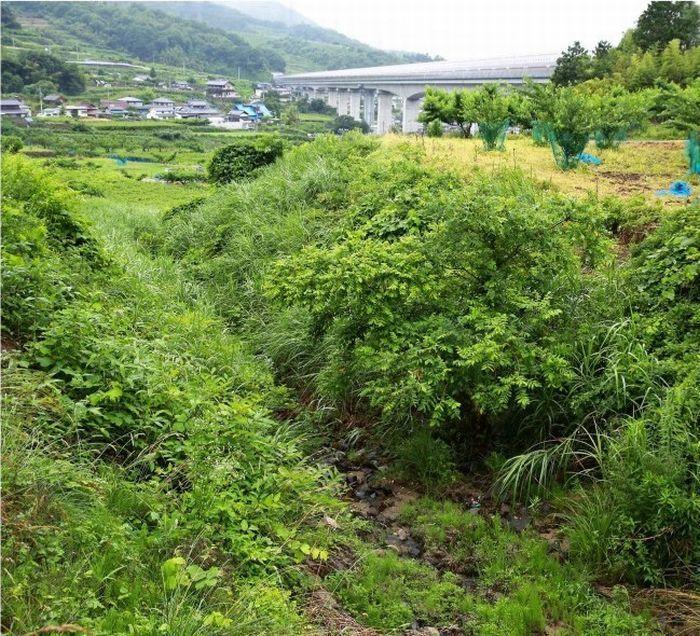 トンネルの掘削工事の影響で水の流れがなくなった沢。奥は山梨リニア実験線=笛吹市御坂町上黒駒