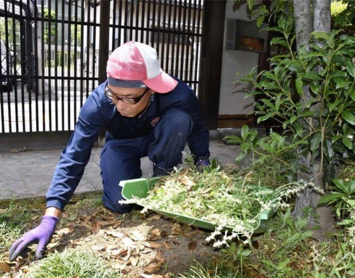 「草むしりマイスター」の早川敬洋さん。片膝を立て、もう片方の膝を地面に着けることで体の負担を軽減させる=甲府市内