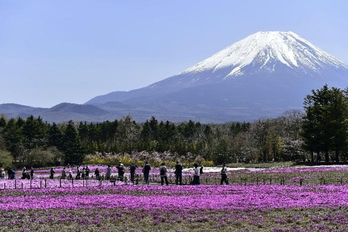 きょうの富士山(4月20日)