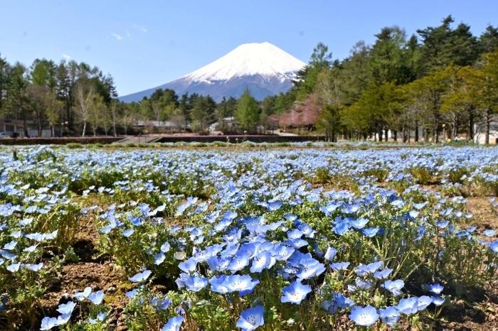 きょうの富士山(4月21日)