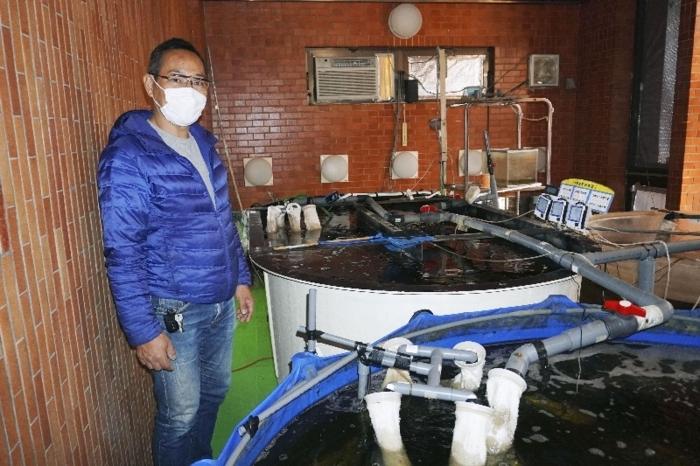 浴場に並ぶ水槽でトラフグなどの養殖に取り組む石川剛さん=三重県桑名市