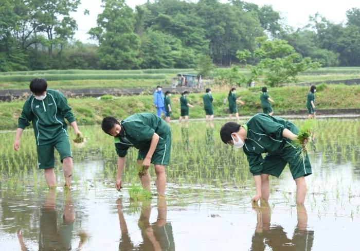 田植えを体験する北杜高の生徒=北杜市長坂町渋沢