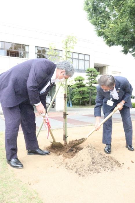 桜を植樹する望月栄一教育長(左)と赤尾好彦教育部長=笛吹市春日居町寺本